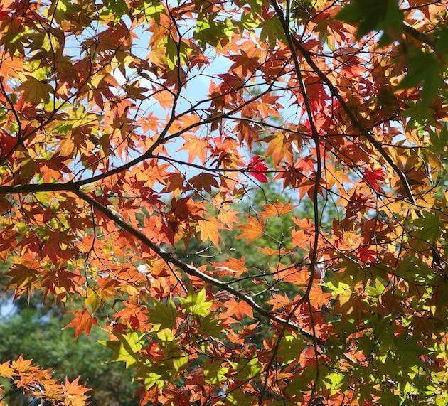 協同村ひだまりファームで秋のお祭りピクニック