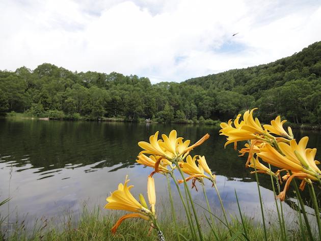 木戸池とニッコウキスゲ