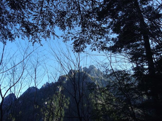 木々の間から瑞牆山が見える